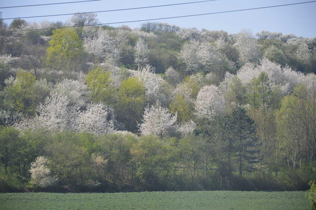 Весна в Моравии